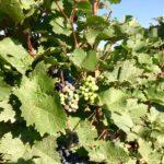 Update 19.10.2017: 'Neuer Wein' – frische Lieferung
